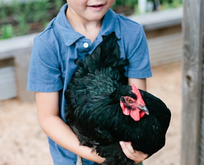 Boy with Chicken Staying at Carlton Landing